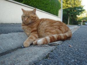 chat dans la rue a la milesse