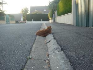 dos de chat dans la rue