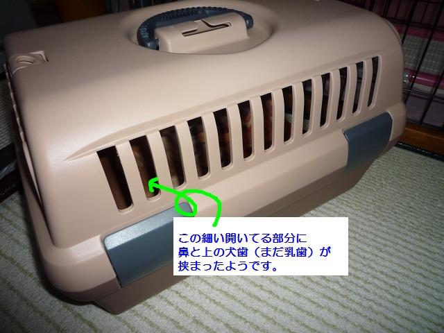 P1050451.jpg