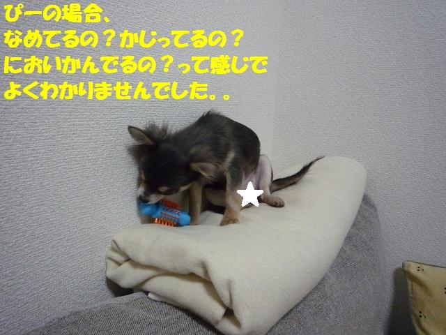 P1060995.jpg