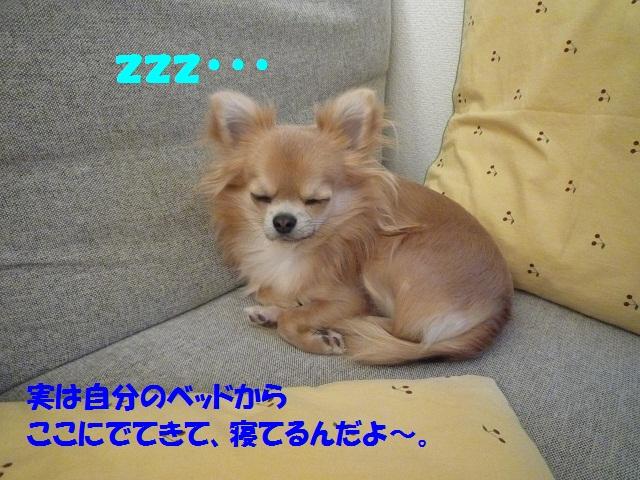 P1070004.jpg