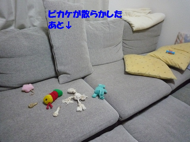 P1070068.jpg