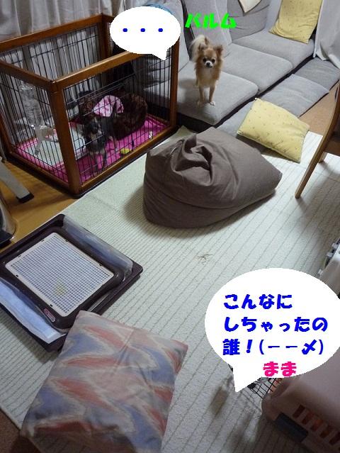 P1070908.jpg