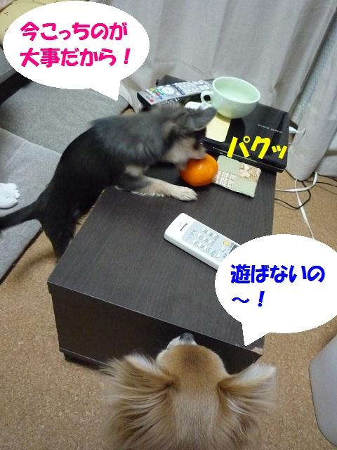 P1070918.jpg