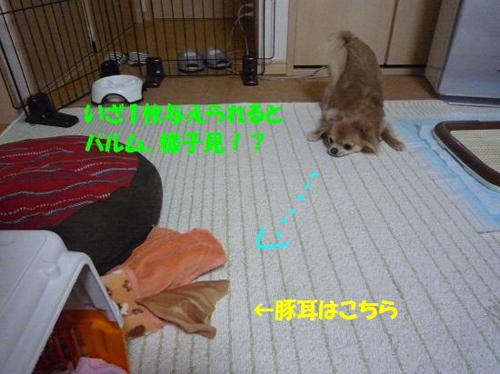 P1370142.jpg
