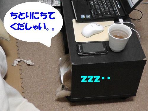 S1320016.jpg