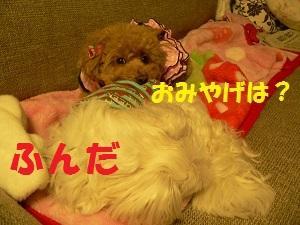 20121213210331884.jpg