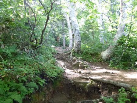 003樹林帯