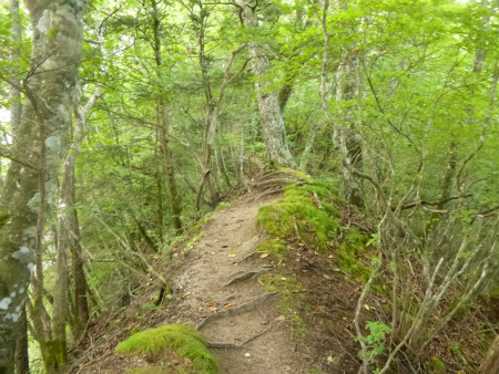 苔生す樹林帯