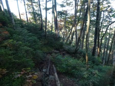 040樹林帯