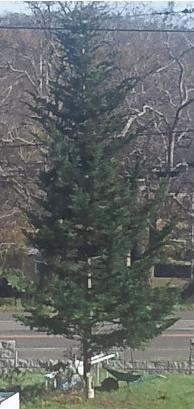 クリスマスツリー。の予定。