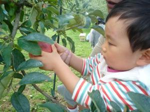 110922 リンゴ狩り04