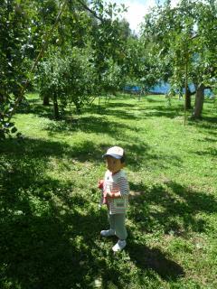 110922 リンゴ狩り06
