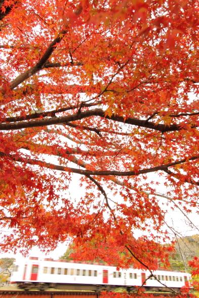 2013/11/28 和歌山電鐵貴志川線 大池遊園