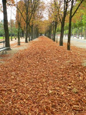 シャンゼリゼ通り横の歩道(Av.drs Champs-Elysees)fromパリ