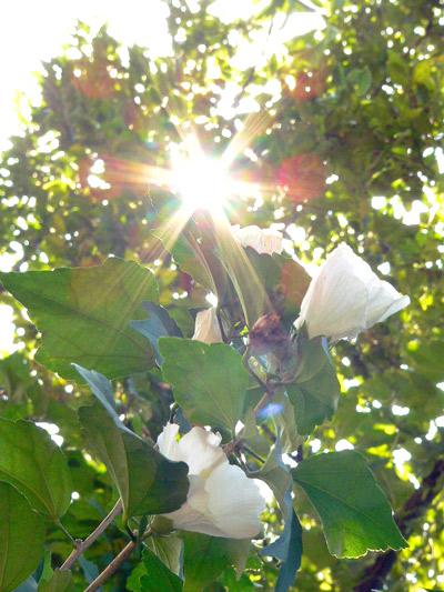 朝の光…いってらっしゃいの艶やかな白