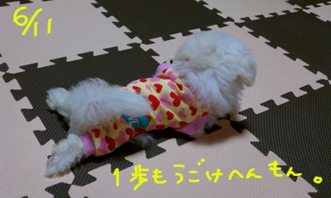 IMAG0646.jpg