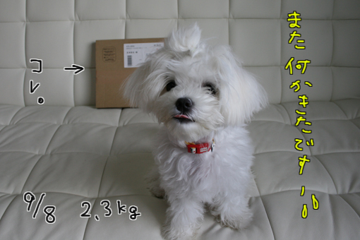 IMG_1465-2.jpg