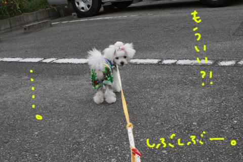 IMG_8735.jpg