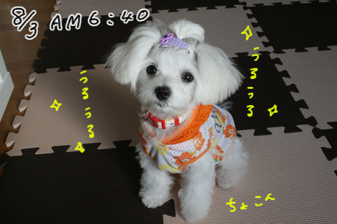 IMG_8900.jpg