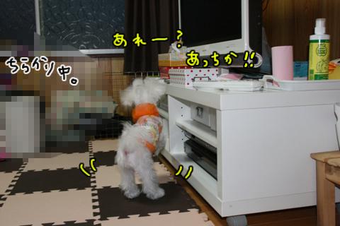IMG_8958-1.jpg