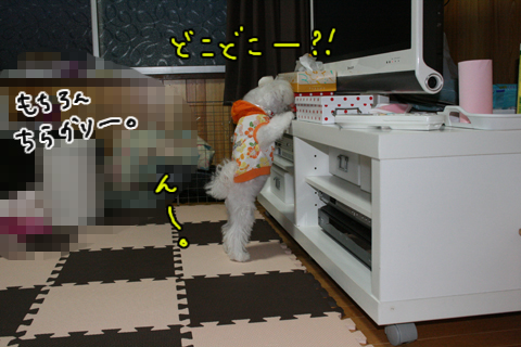 IMG_8959-1.jpg