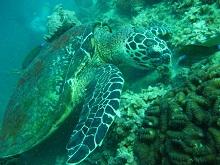 タオ島 ダイビング アジアダイバーズ4