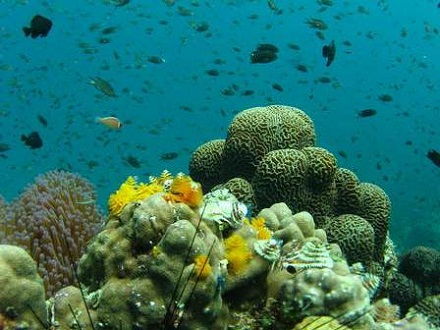 タオ島 ダイビング 水中世界
