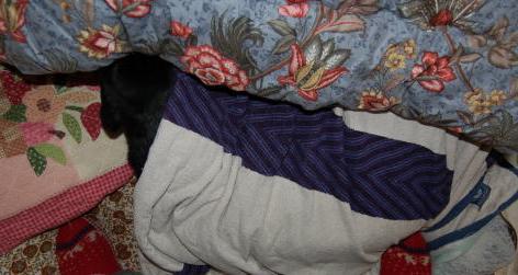 ベッドの足元で熟睡するグレ