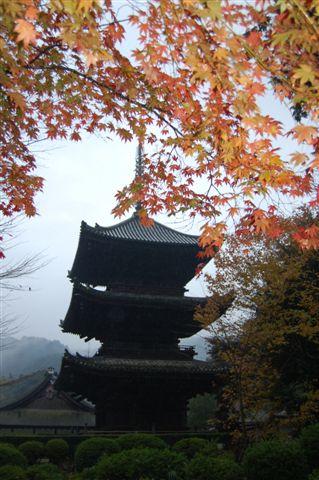 滋賀2008 11.24 099.jpg