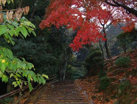 滋賀2008 11.24 119.jpg