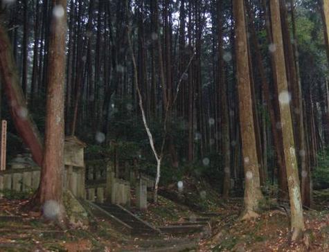滋賀2008 11.24 141.jpg