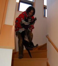 階段をあがるんは大変だあ!