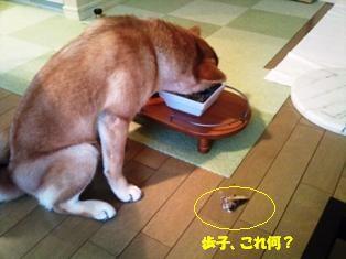 お頭だけ除けて飯を食う犬。。。