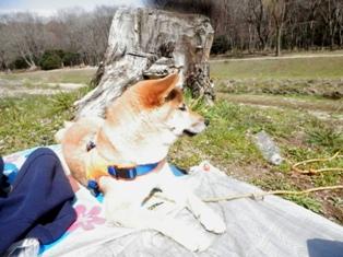 当たり前のようにシートに横たわる犬。