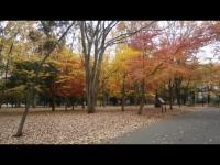 府中の森公園秋