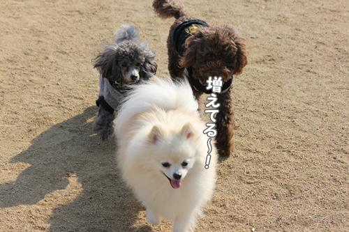 120109zoushoku.jpg