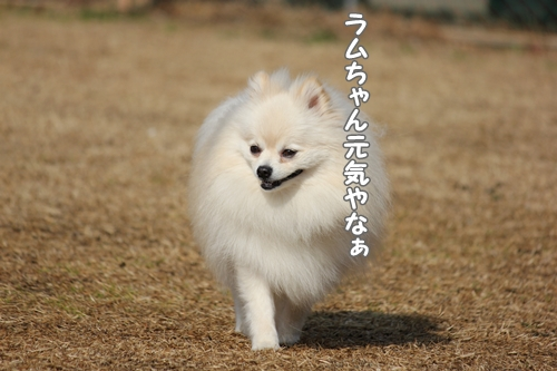 120122harokani.jpg