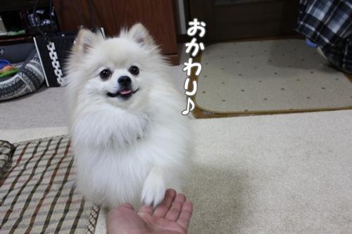 1222baibaiokawa.jpg