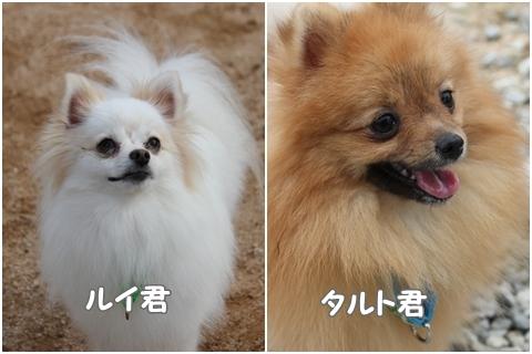 BBQruitaru.jpg