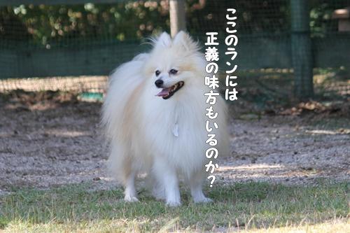 IMG_7295.jpg