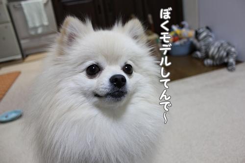 KUROHATI1.jpg