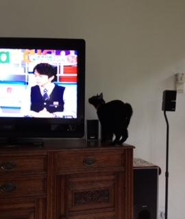 ポメロ、テレビ