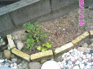 アプローチ花壇