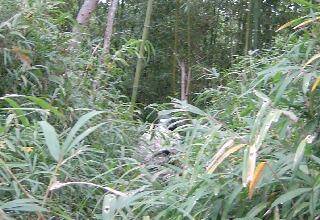 DSC011 NO9 20111023