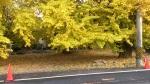 黄葉まつり