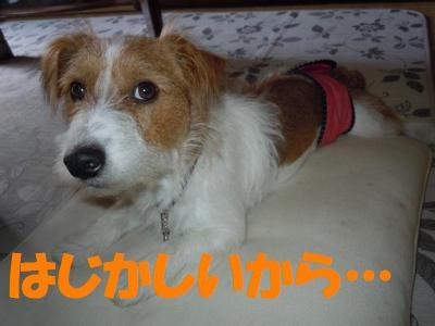 DSCN2431_convert_20111005181913.jpg