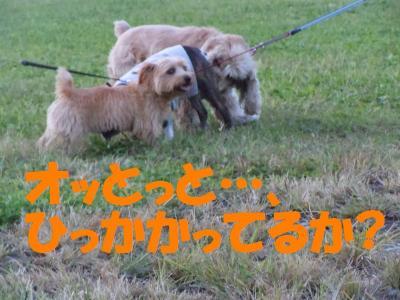 DSCN2443_convert_20111007151721.jpg