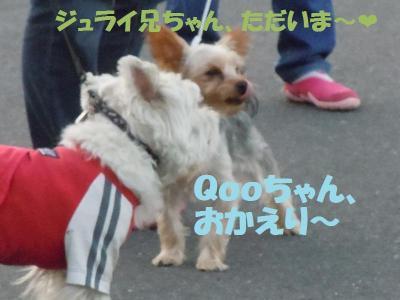 DSCN2444_convert_20111003175156.jpg