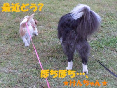 DSCN2454_convert_20111116104621.jpg